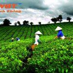 Thiết Kế Website Bán Chè Thái